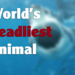 World's Deadliest Creature 2