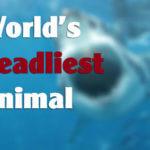 dead 150x150 - World's Deadliest Creature