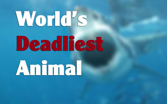 dead - World's Deadliest Creature