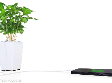 plant3 364x268 - Now Plants can charge your phone