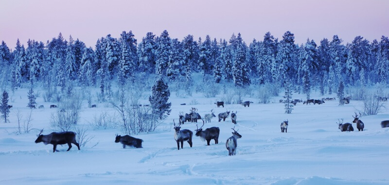 lapland 10 - Here you travel to Lapland