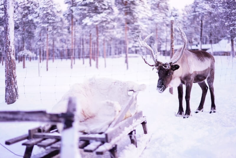 lapland 20 - Here you travel to Lapland