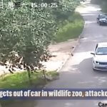 dd 150x150 - Shocking: A woman was dragged and killed by a tiger in China