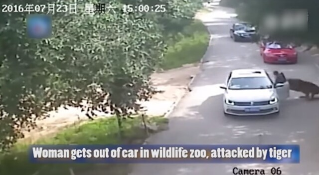 dd - Shocking: A woman was dragged and killed by a tiger in China