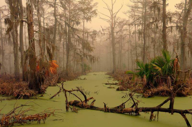 swamp in Louisiana