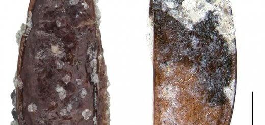 beetles-antartica
