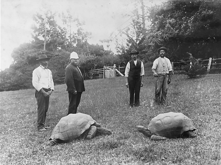 Jonathan is a 187 years old Tortoise and the oldest animal alive 1
