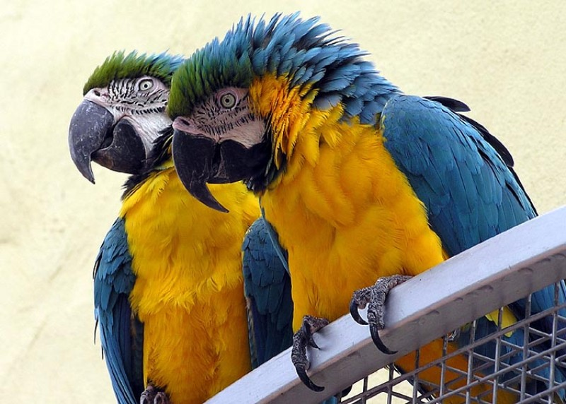 Macaw bird - Here Are 5 Exotic Animals That You Can Have As Pets