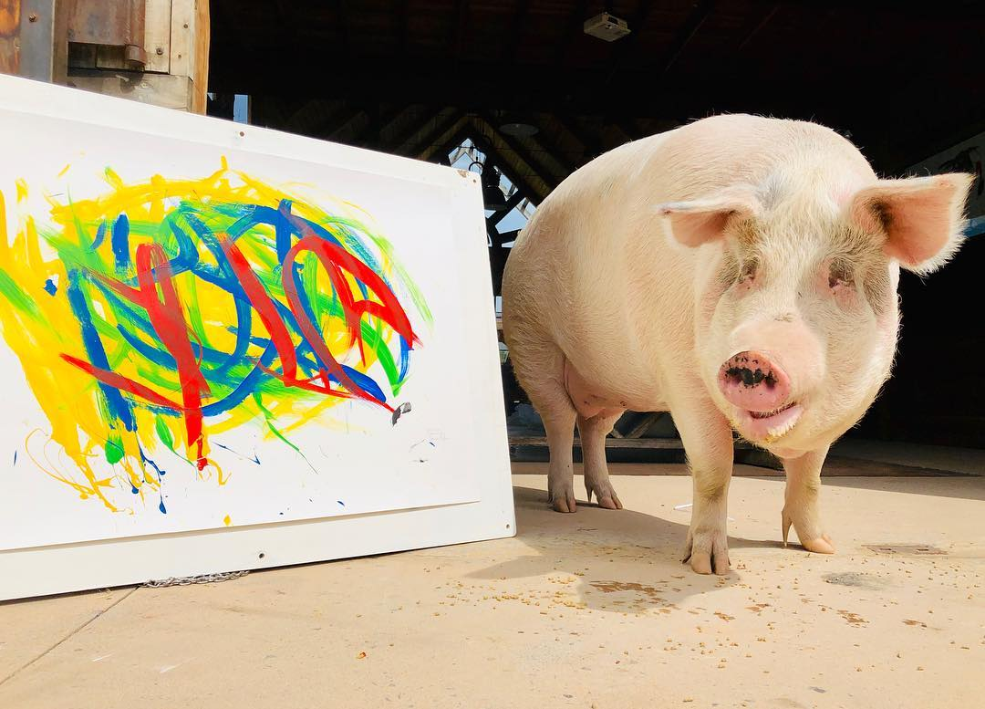 Meet Pigcasso: The Pig Who Was Rescued And Now Paints Art