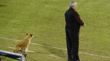 A Professional Soccer Coach Has A Dog As His Assistant Coach