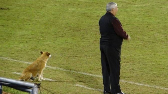 Professional soccer Coach Has Dog Assistant Coach 1 - A Professional Soccer Coach Has A Dog As His Assistant Coach