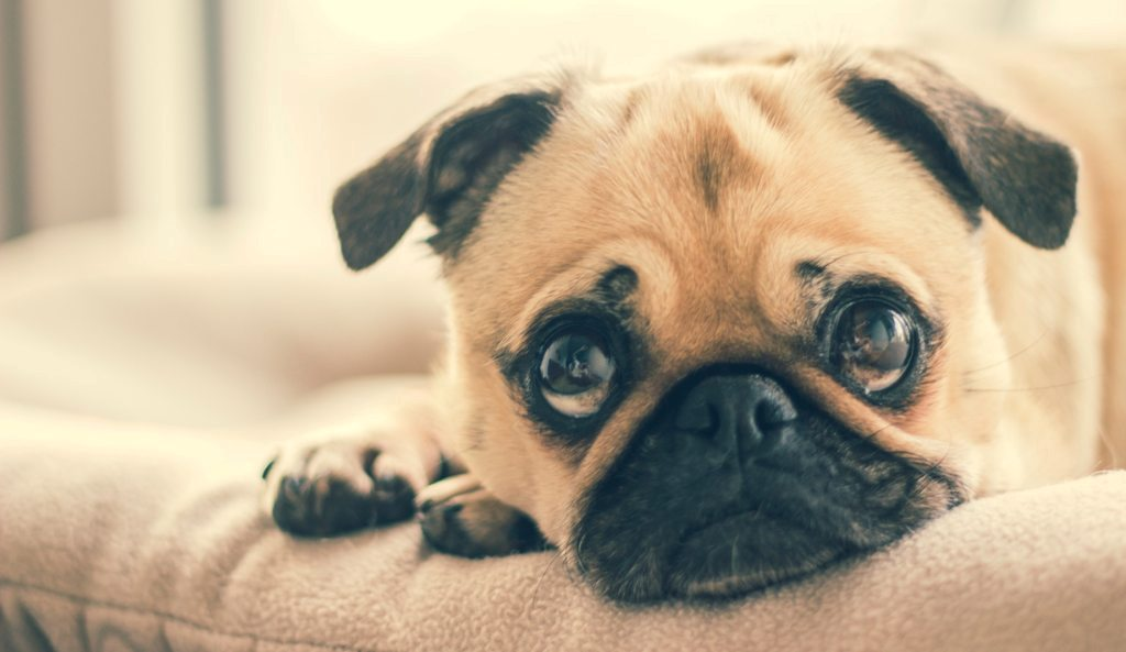 Pay Attention To These 8 Emotions Of Your Dog. Yes, They Feel Them Too! 3