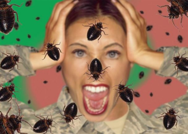bed bugs scary