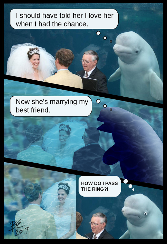 whale photobombed wedding