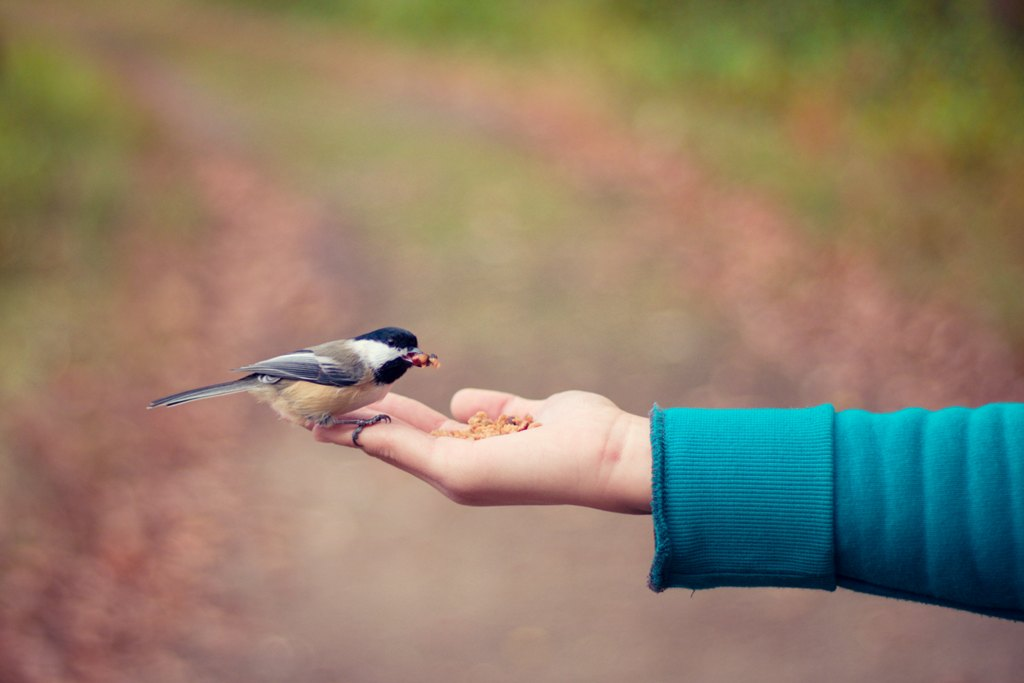 bird in hand - Taking Care Of A Pet Can Teach You These 4 Major Things In Life