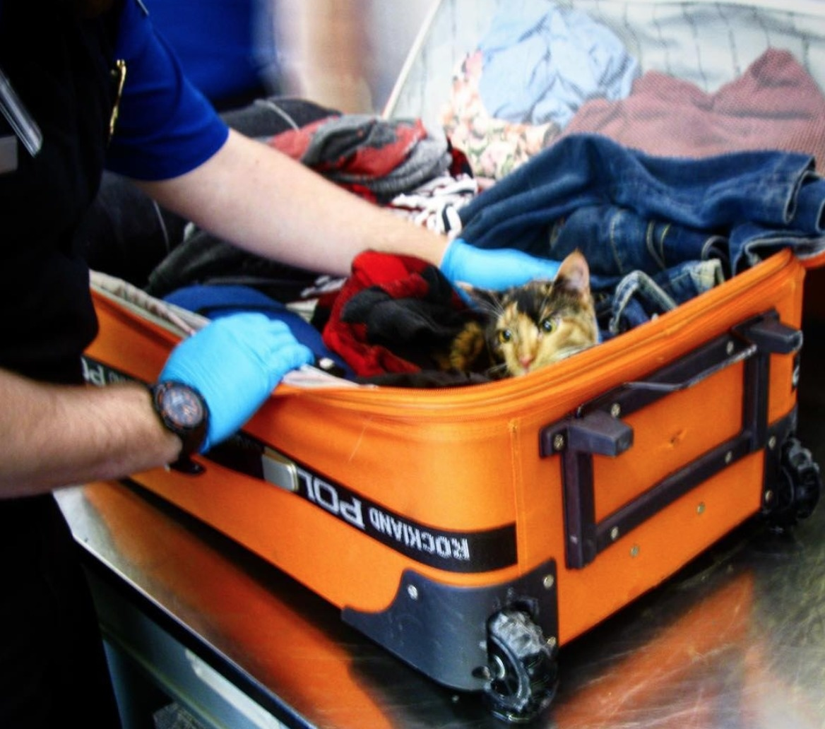 cat in the baggage found by tsa