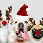 5 Tips To Keep Your Pets Safe This Holiday Season