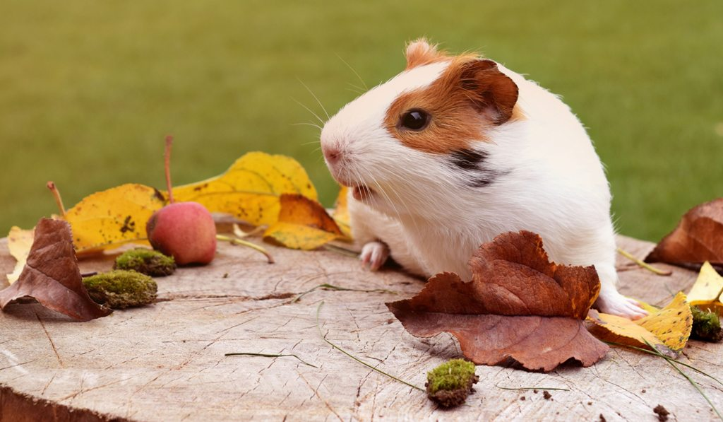 hamster - Here Are 7 Low Maintenance Pets For The Busy Working Class