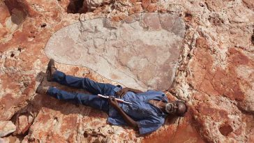 largest dinosaur footprints