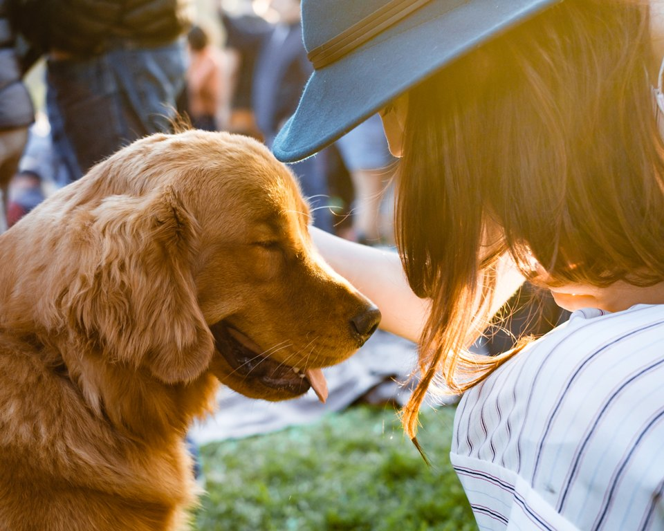Make Your Pet Feel Special With These 4 Treats 2
