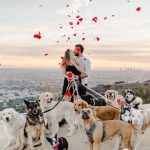 Man Proposed With 16 Dogs And The Bride Said It Was Better Than Releasing Doves