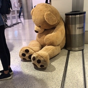 teddy bear left at airport because of its size